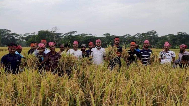 করোনা মহামারিতে অসহায় কৃষকের ধান কেটে দিলেন ছাত্রলীগ''